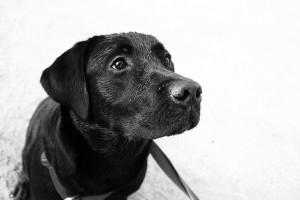 Le rôle que peut avoir un animal sur notre moral