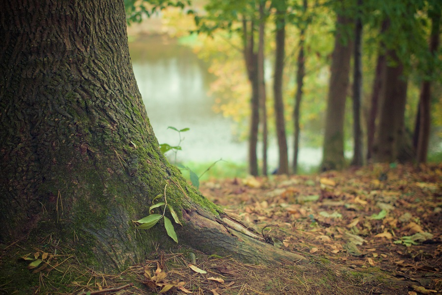 Nature végétation