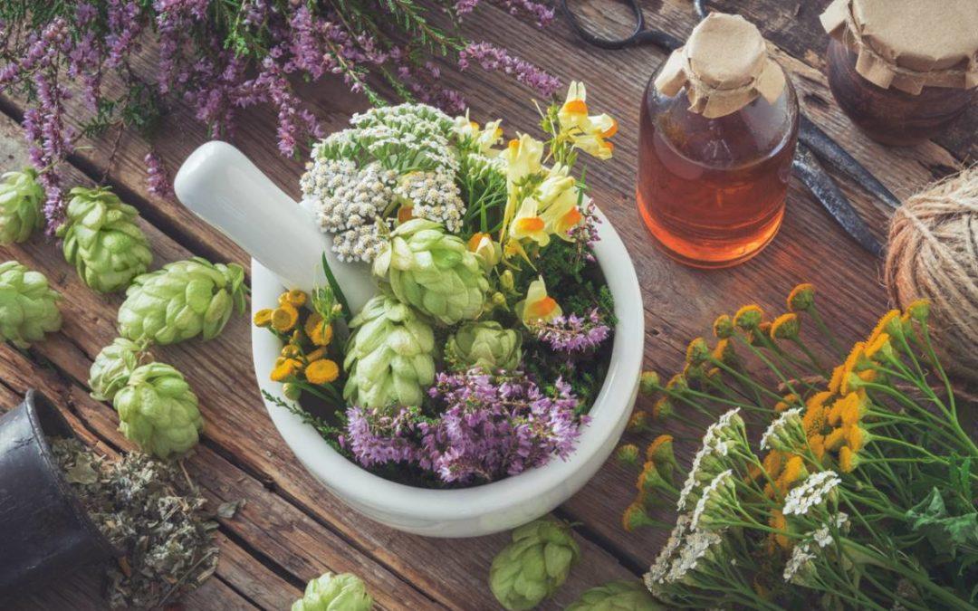 Devenir naturopathe avec l'autoformation